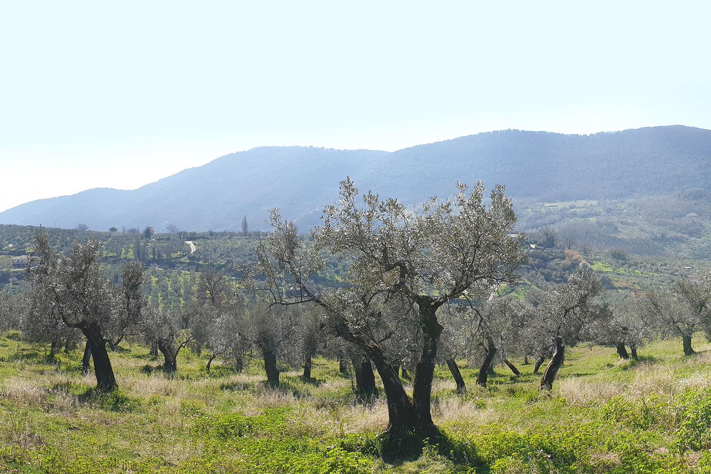 oleificio-dei-fiori-s-r-l